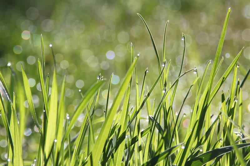 Que sont les 3 cures naturopathiques ?