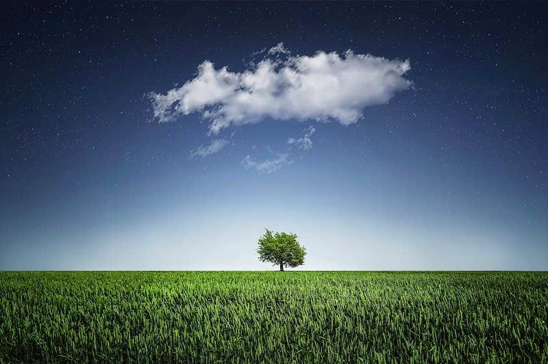 Existe-t-il un lien entre la santé et l'environnement ?